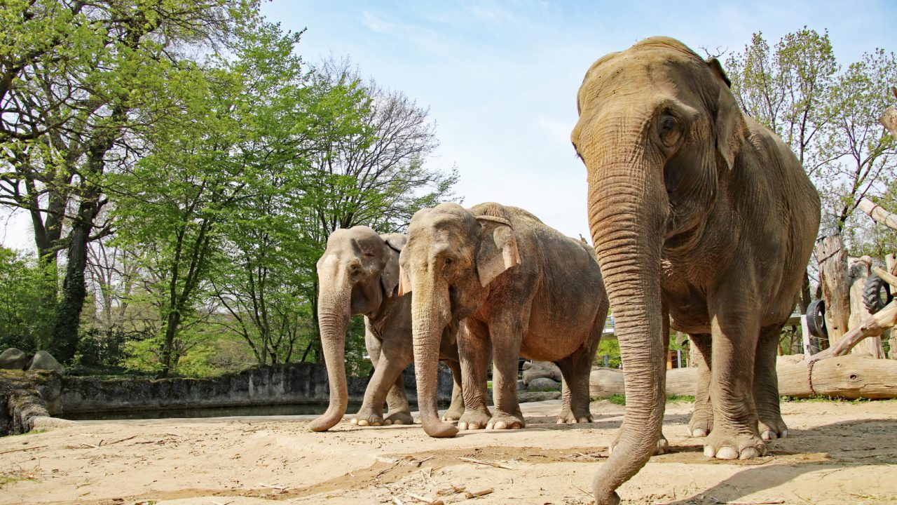 Karlruhe Zoo