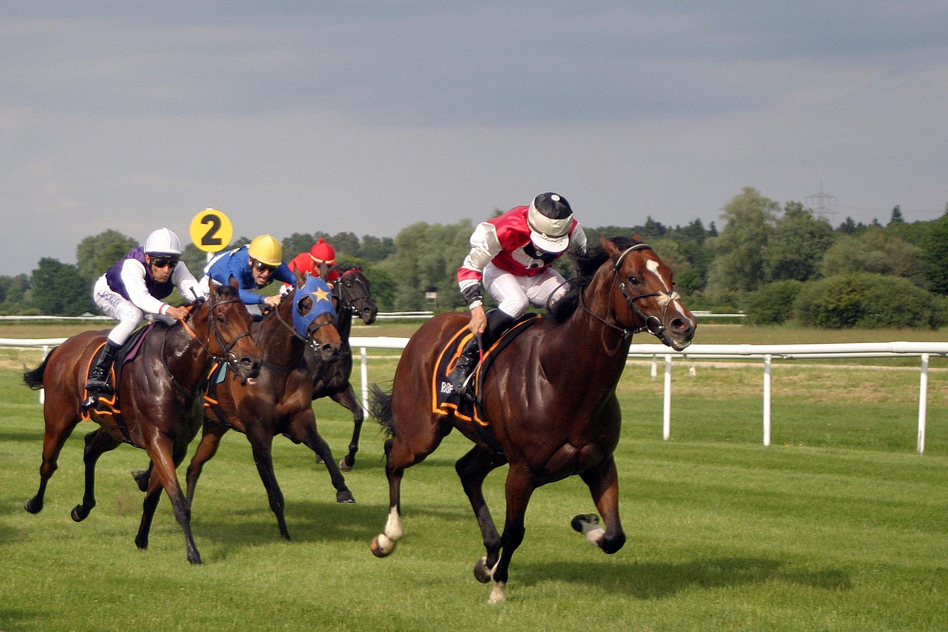 Pferderennen Mannheim