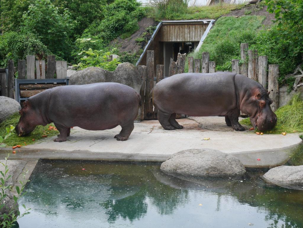 Zoo Karlsruhe Kontakt