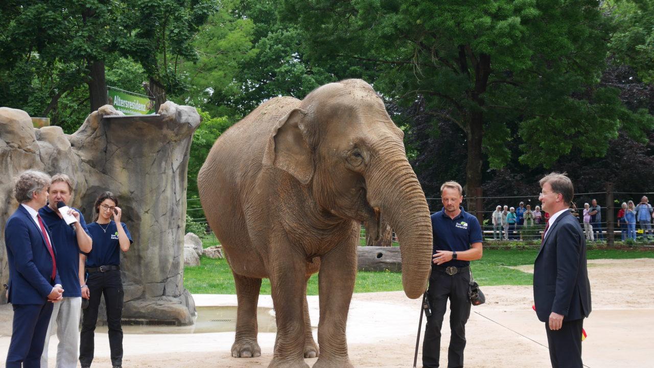 Zoo Karlsruhe Elefanten