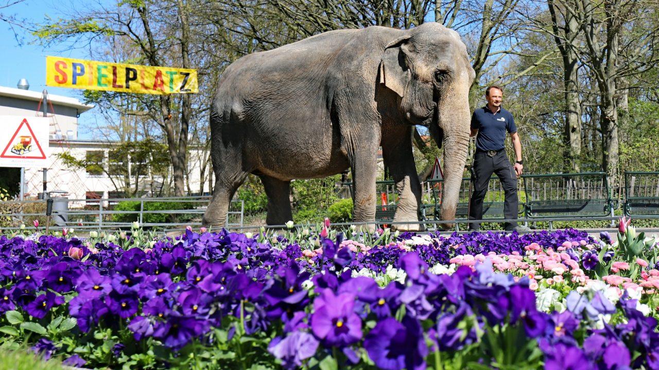 Eintritt Karlsruher Zoo