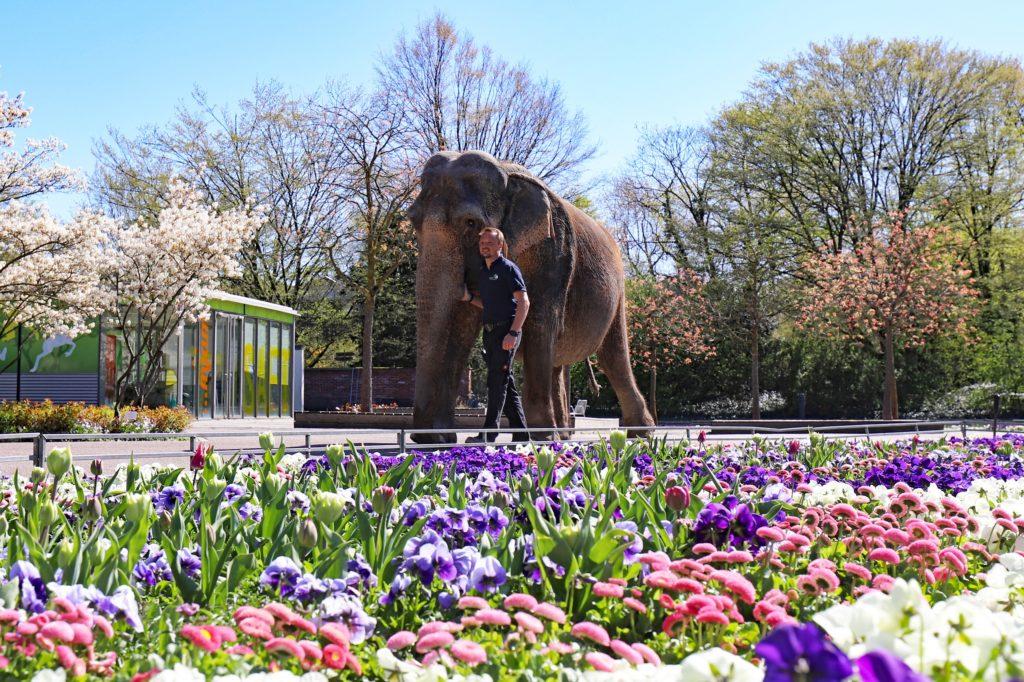 Zoo Karlsruhe Ticketfritz